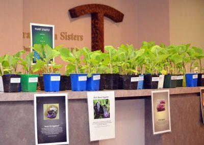 18-SpringEvent-EggplantStarts