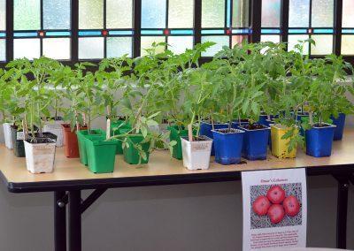 18-SpringEvent-TomatoStarts1
