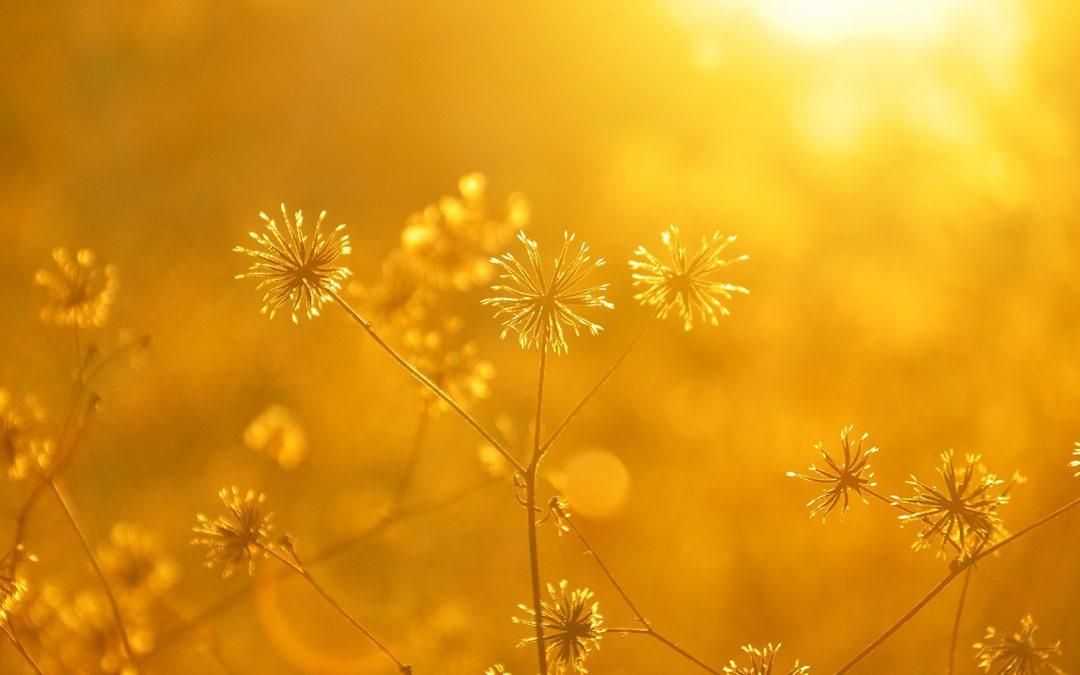 Sacred Summer Sauntering